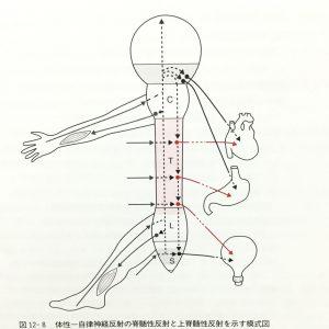 自律神経反射